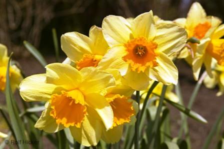 spring_flowers_t1669.jpg