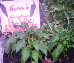 Averi\'s Annaheims