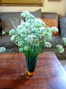 chives-009