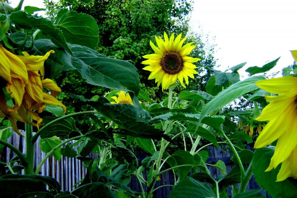 garden-022
