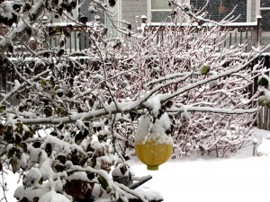 snow-day-153