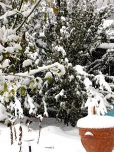 snow-day-154