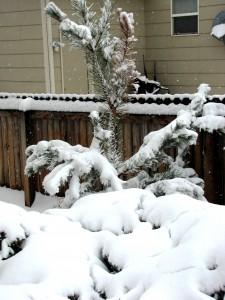 snow-day-2-010