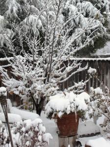 snow-day-2-012