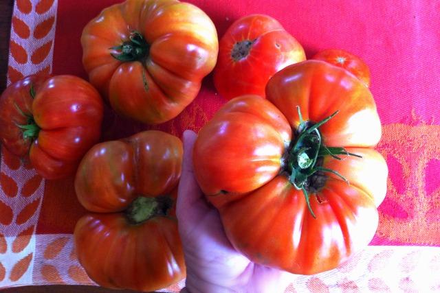 tomatoes beefsteak