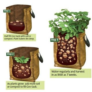 http://www.homesteadsurvivalist.com/2013/05/growing-potatoes-in-containers.html