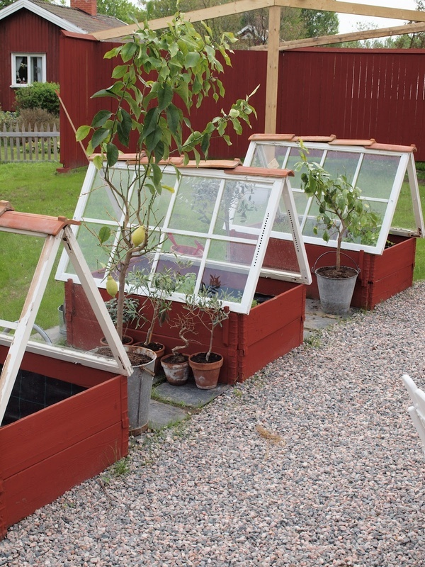 garden's glory raised beds with windows to create mini greenhouses