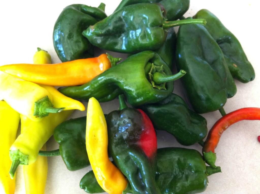 harvest chiles