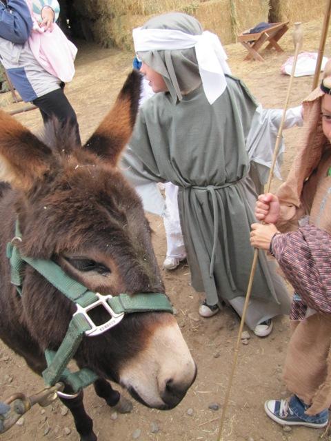Nativity 2010 (3)