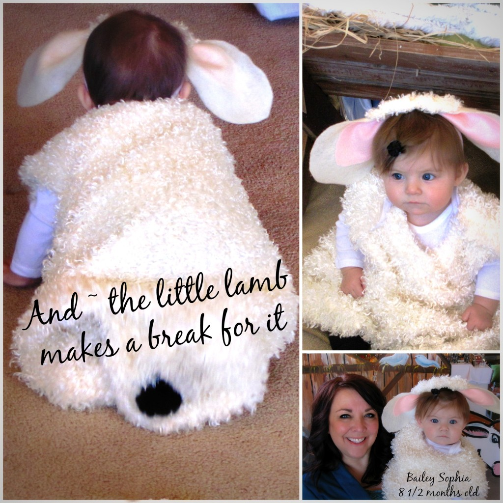 bailey little lamb