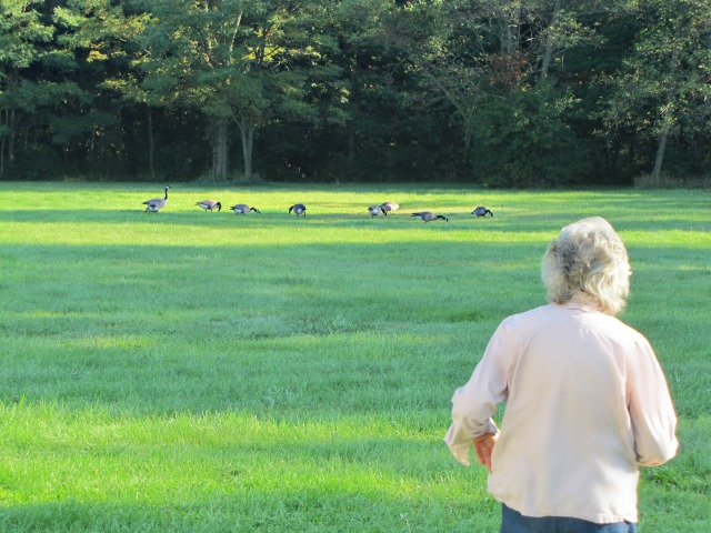 #SeptemberMorn #NWIndiana geese and mom 1
