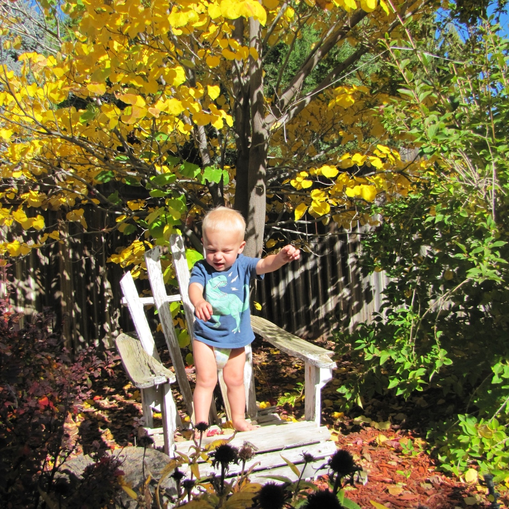 In the back yard yesterday malakai not wanting to pose