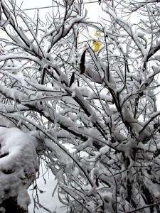 snow-day-155
