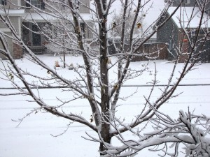 snow-day-157