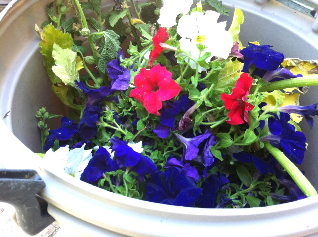 petunias in the trash can