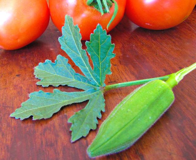 okra leaf