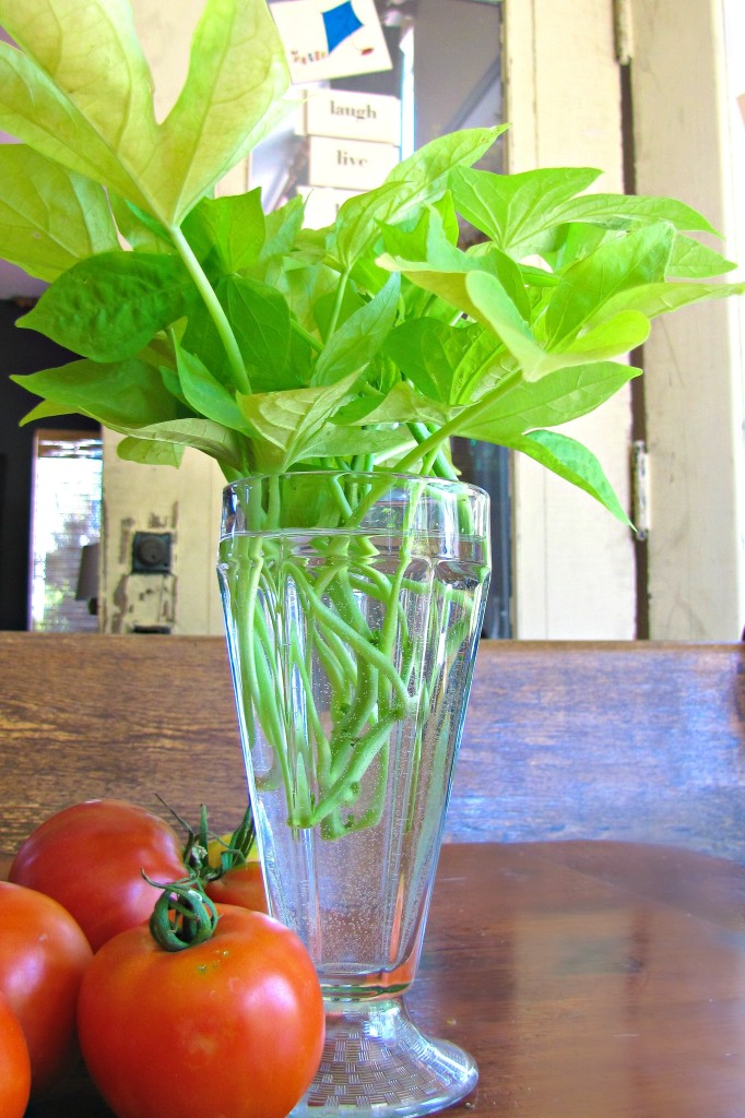 sweet potato vine leaves in a vase