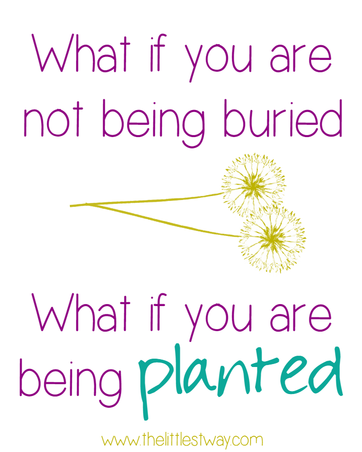 being planted