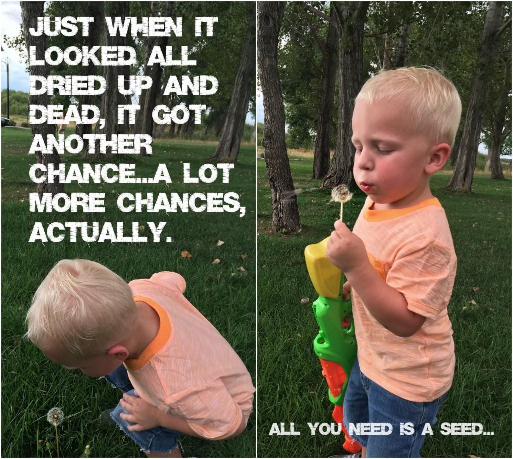 kai two blowing dandelions